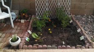 garden beginning